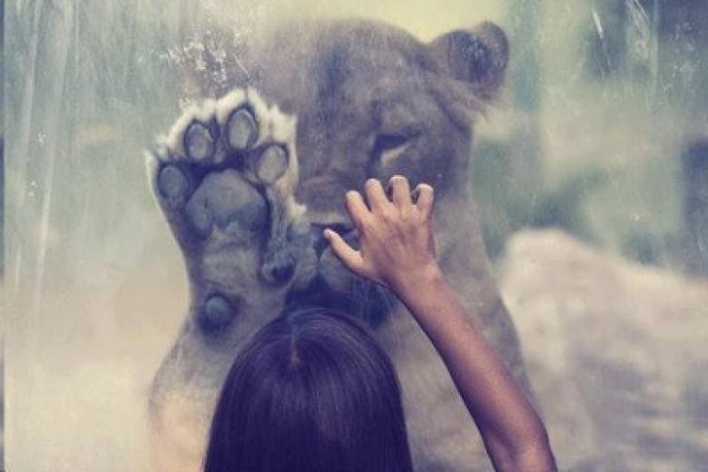 hayvanat-bahceleri-patiliyo-10