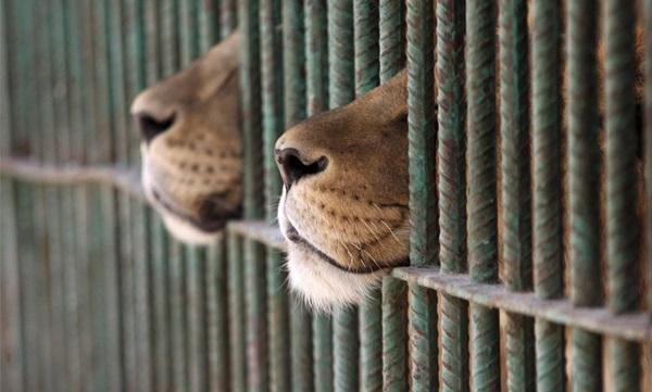 hayvanat-bahceleri-patiliyo-13