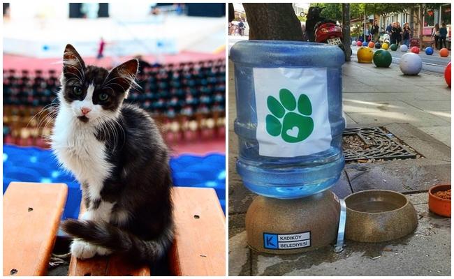 Kadıköy Belediyesi'nin Instagram'ından Sokak Hayvanlarını Çok Mutlu Eden 16 Fotoğraf
