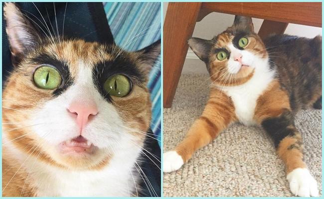 Kocaman Kaşları Olan Kedinin Hayatından 9 Bol Kaşlı Fotoğraf