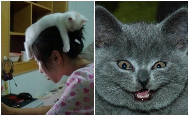 Kedinizin Sizi Tamamen Ele Geçirdiğinin 6 Miyavsal İşareti