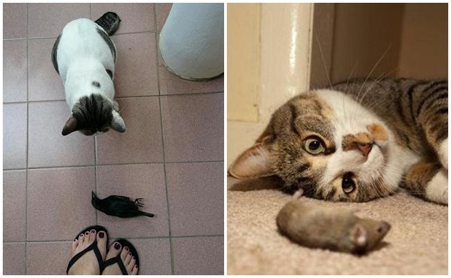 Kediler Neden Yakaladıkları Böcek ve Diğer Hayvanları Getirip Salonun Ortasına Bırakır?