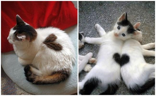 Kedilerin Minik Kalpleri Hakkında 7 Önemli Veteriner Bilgisi