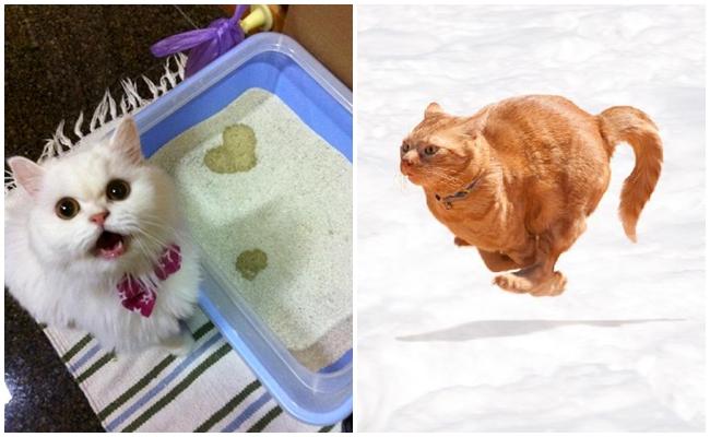 Cevaplıyoruz: Kediniz Kakasını Yaptıktan Sonra Neden Çılgına Döner?