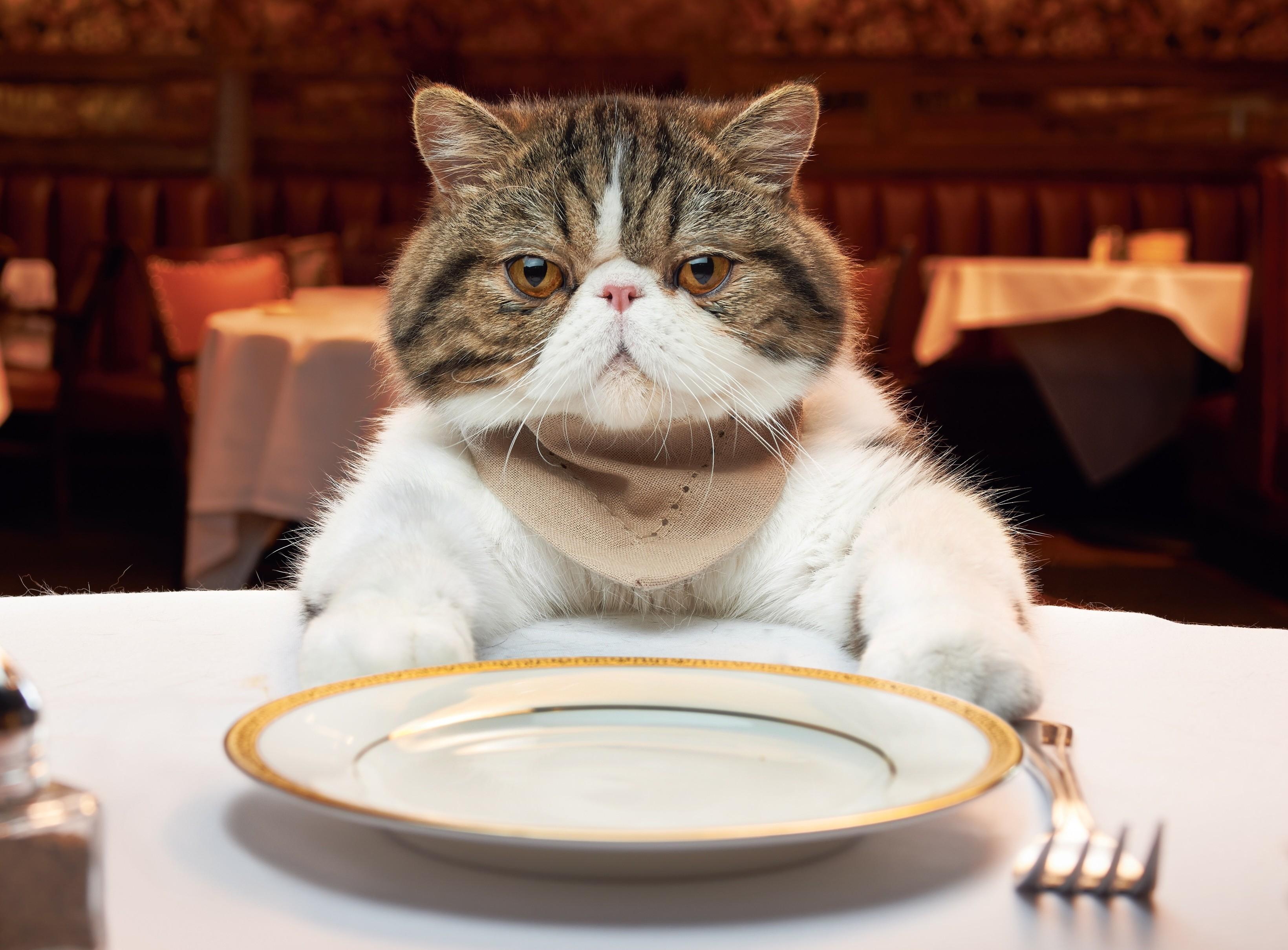 kedi-olmak-patiliyo-10