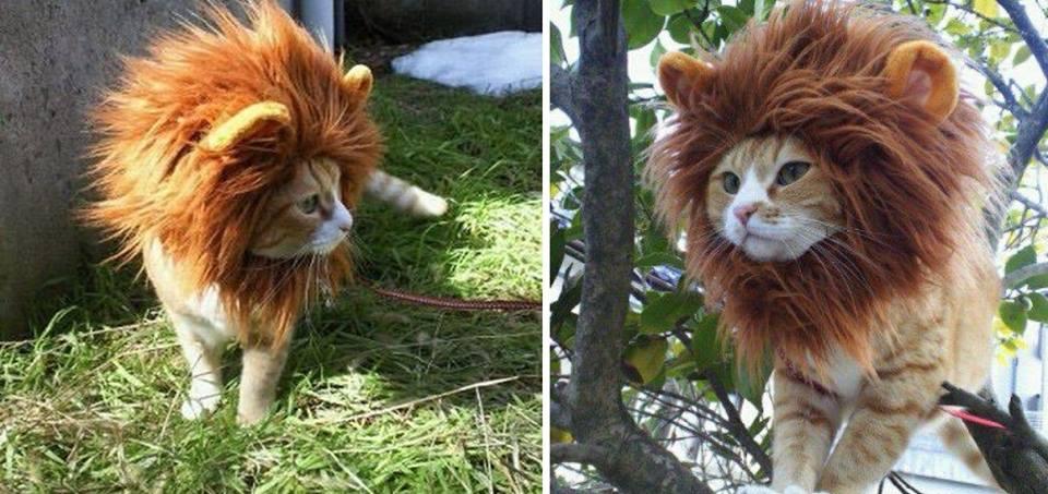 kedi-olmak-patiliyo-12