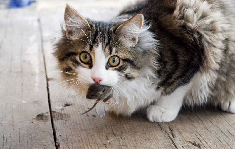 kedi-olmak-patiliyo-13