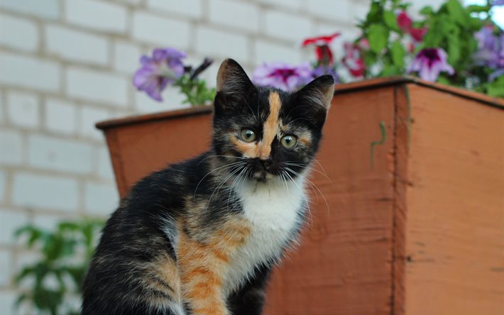 kedi-olmak-patiliyo-15