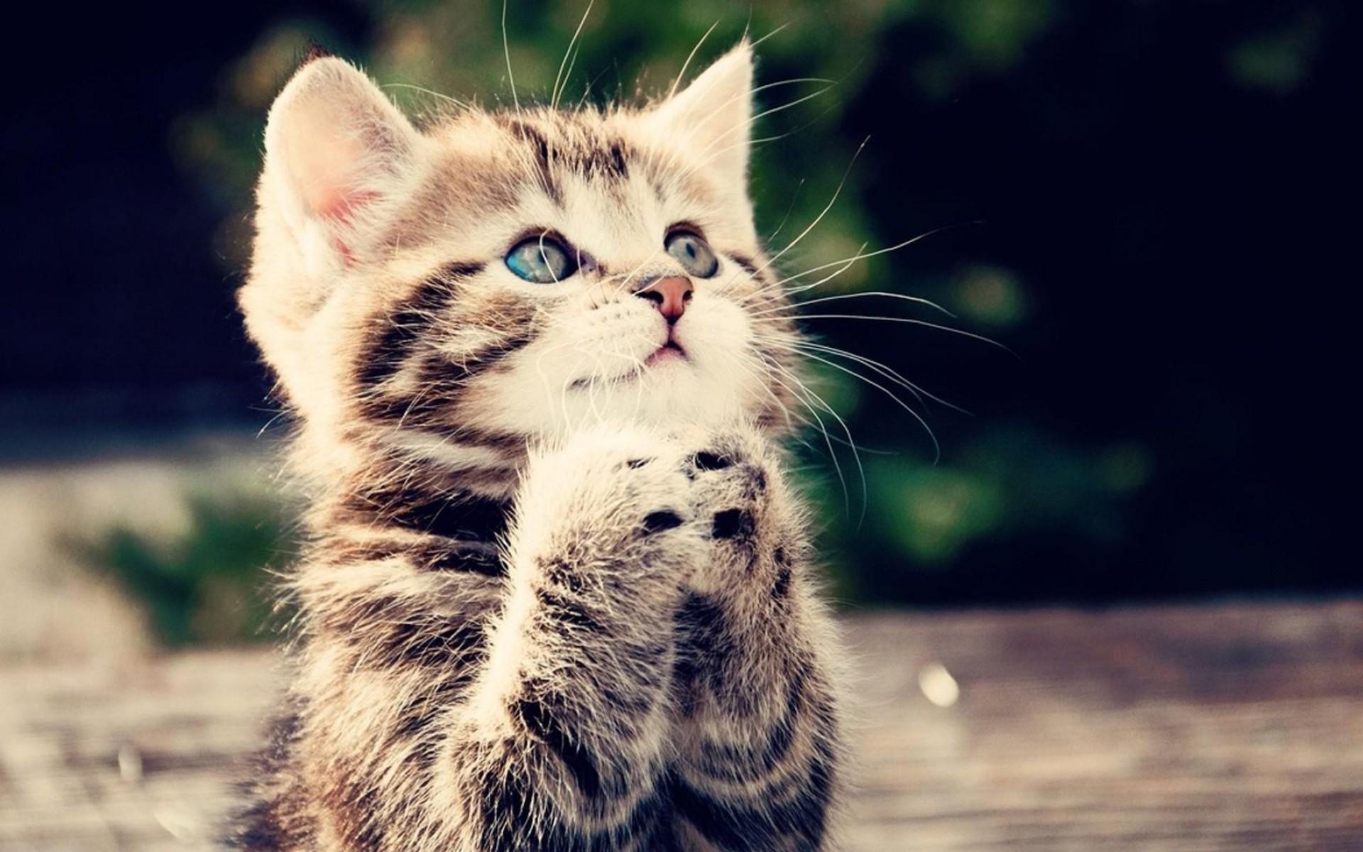kedi-olmak-patiliyo-2