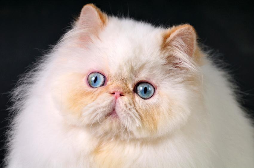 kedi-olmak-patiliyo-6