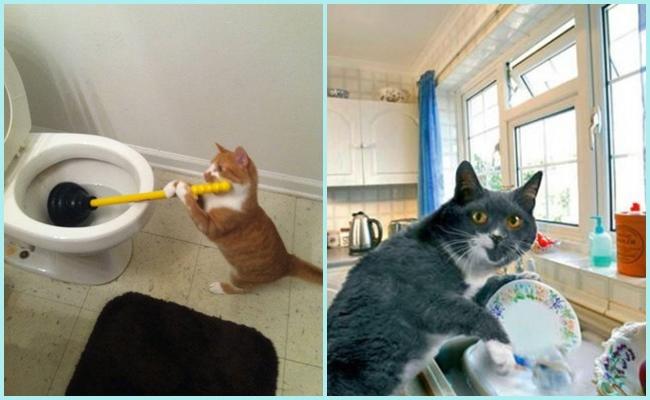 Kedilere Pis Diyenlere İnat Onların Pırıl Pırıl Olduklarının 8 Anatomik Nedeni