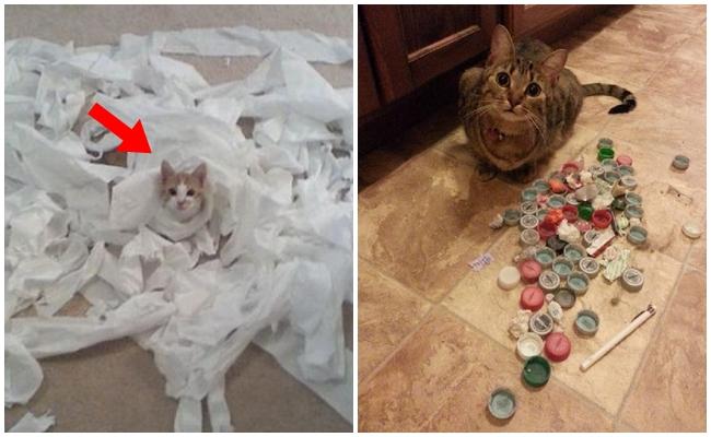 Kedilerin Yaş Mamadan Bile Daha Çok Sevdiği 10 Düşük Bütçeli Oyuncak