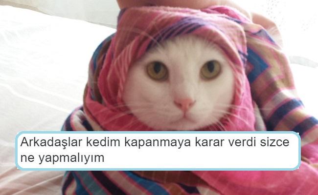 Kedisi Olan Twitter Kullanıcılarından Gülmekten Miyavlatacak 18 Tweet