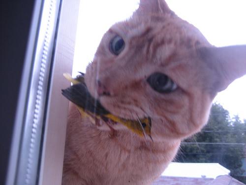kediler-bocek-fare-patiliyo-2