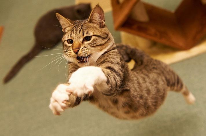 kediler-bocek-fare-patiliyo-3