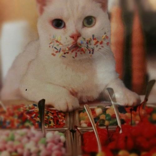 kediler hakkinda bilgiler