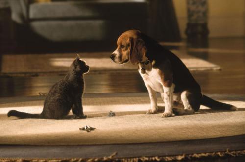 kediler-hakkinda-bilgiler-patiliyo-2