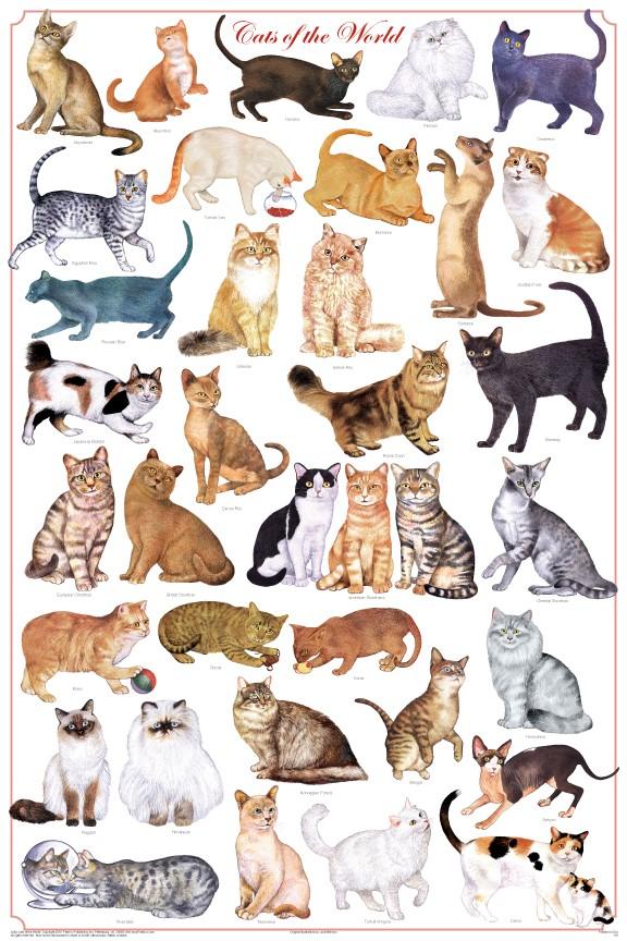 kediler-hakkinda-bilgiler-patiliyo-3
