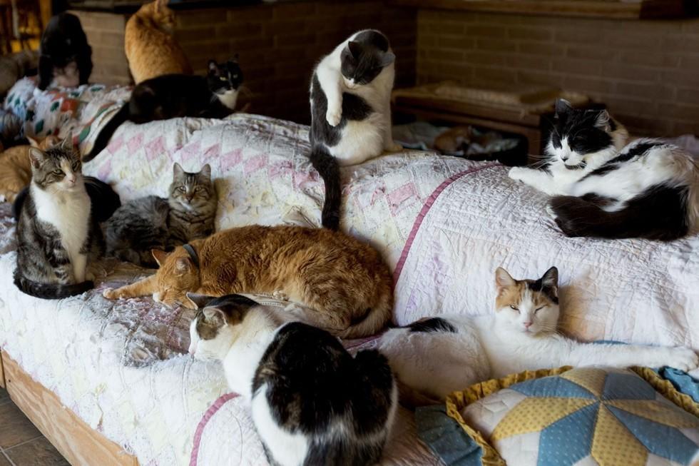 kediler-hakkinda-bilgiler-patiliyo-7