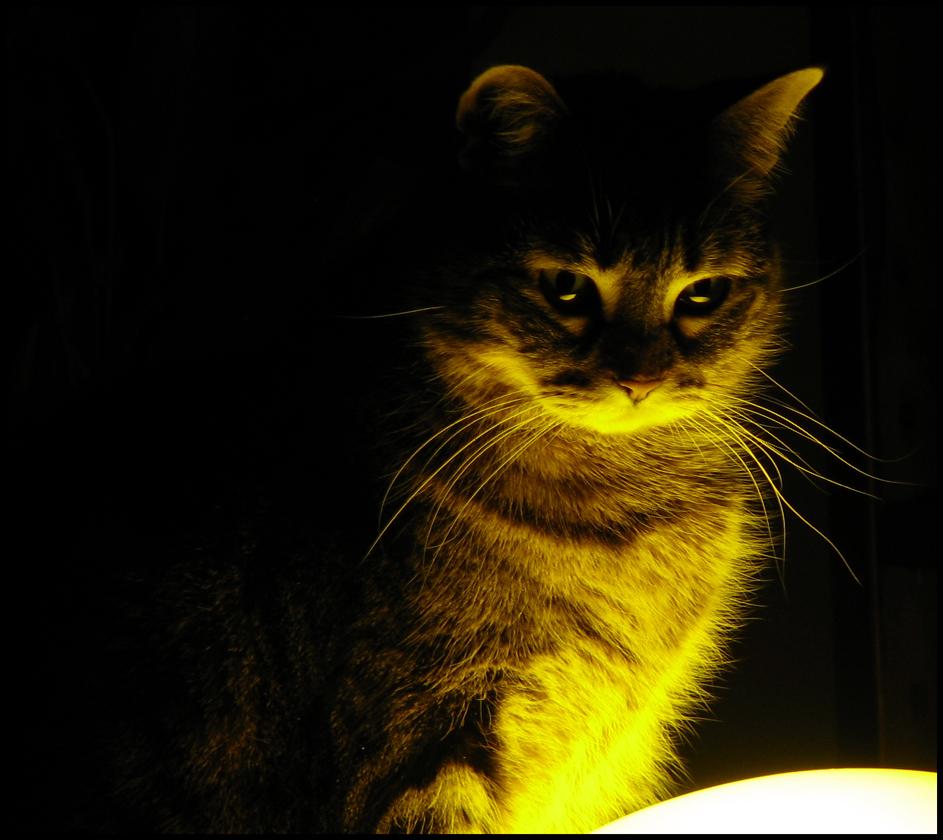 kediler-hakkinda-ilginc-bilgiler-patiliyo-10