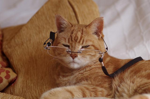 kediler-hakkinda-ilginc-bilgiler-patiliyo-11