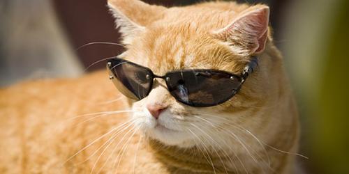 kediler-hakkinda-ilginc-bilgiler-patiliyo-13