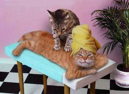 Cat massage - picture is all over the internet so must be in the public domain