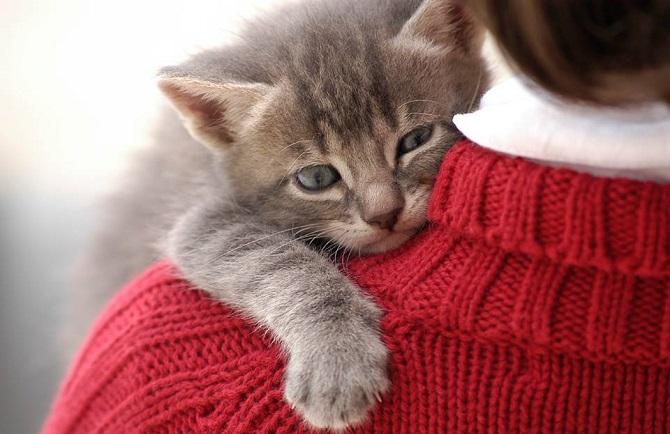 kediler-hakkinda-ilginc-bilgiler-patiliyo-19