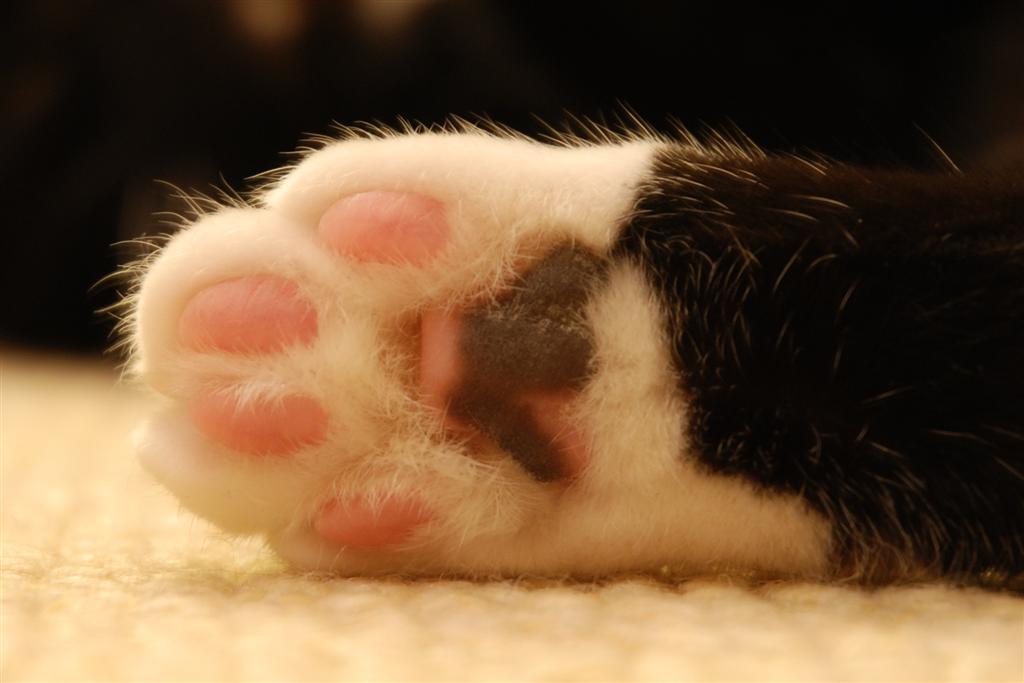 kediler-hakkinda-ilginc-bilgiler-patiliyo-6