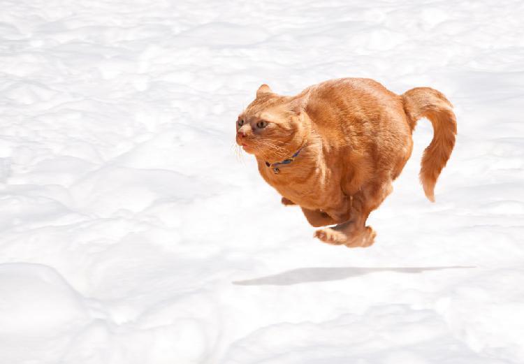 kediler-kaka-yaparken-neden-miyavlar-patiliyo-1