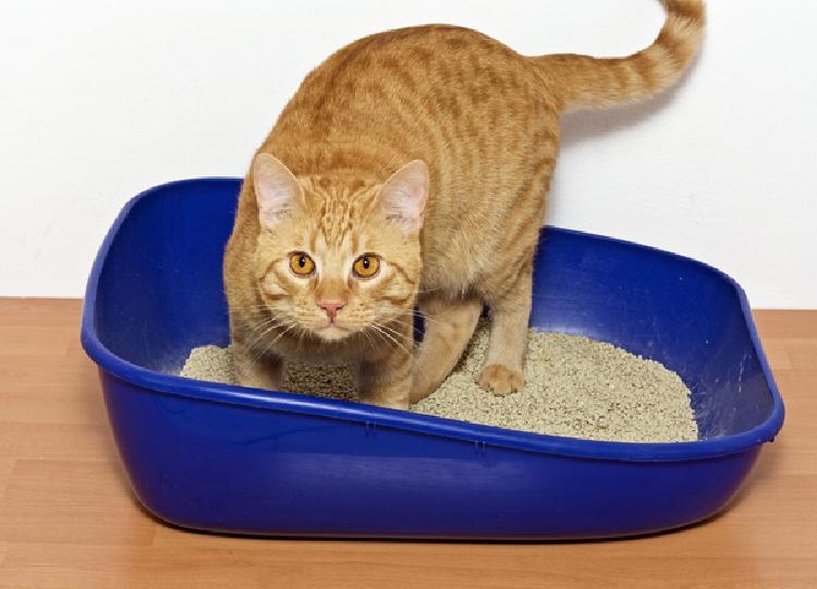 kediler-kaka-yaparken-neden-miyavlar-patiliyo-2