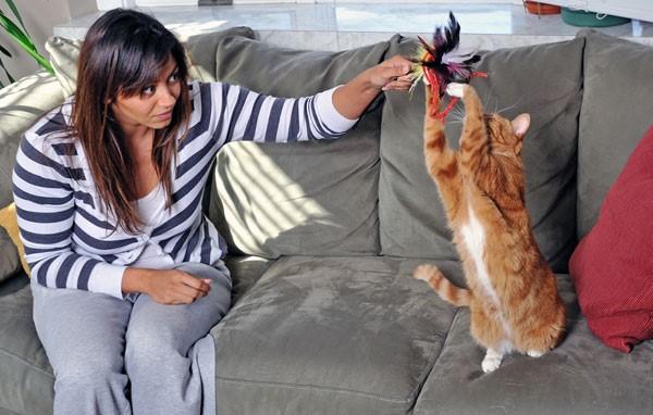 kediler-nasil-oyun-oynar-patiliyo-1