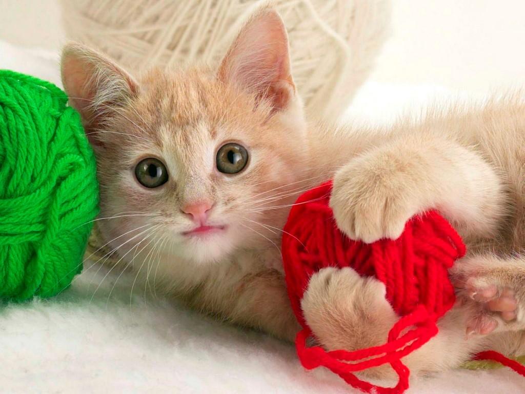 kediler-nasil-oyun-oynar-patiliyo-2