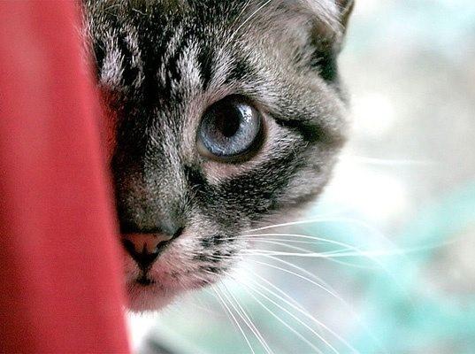 kediler-nasil-oyun-oynar-patiliyo-3