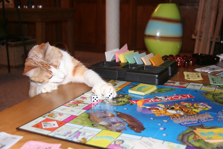 kediler-nasil-oyun-oynar-patiliyo-5