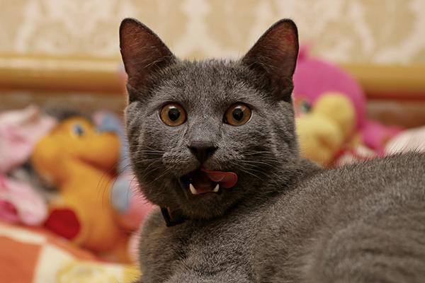 kediler-nasil-temizlenir-patiliyo-1