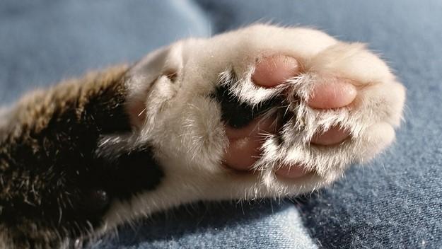 kediler-nasil-temizlenir-patiliyo-2