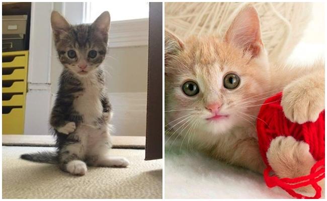 Kedinizin Muhteşem Bir Oyun Arkadaşı Olduğunu Gösteren 6 Olay