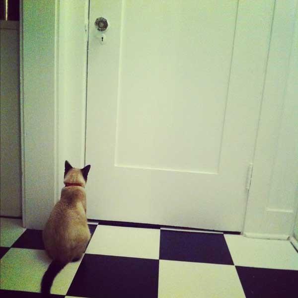 kedilerin-ne-ladar-akilli-oldugunu-gosteren-olaylar-patiliyo-2