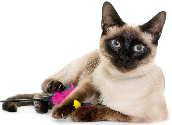kedilerin-ne-ladar-akilli-oldugunu-gosteren-olaylar-patiliyo-3
