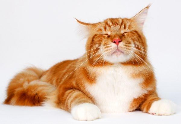 kedilerin-ne-ladar-akilli-oldugunu-gosteren-olaylar-patiliyo-4