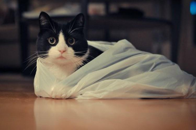 kedilerin-sevdigi-oyuncaklar-patiliyo-1