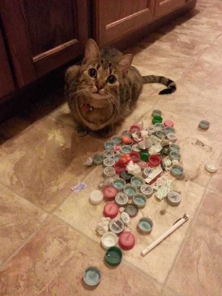 kedilerin-sevdigi-oyuncaklar-patiliyo-10