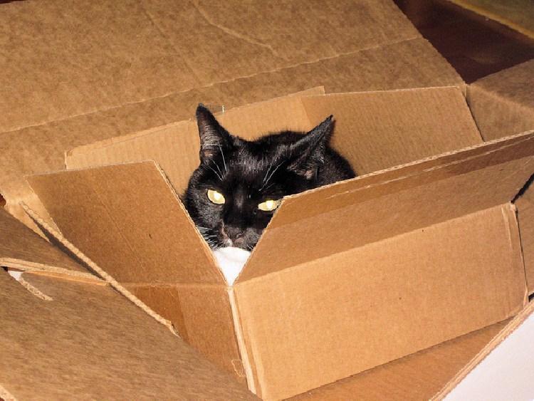 kedilerin-sevdigi-oyuncaklar-patiliyo-2