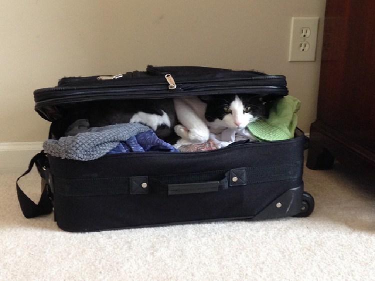 kedilerin-sevdigi-oyuncaklar-patiliyo-3