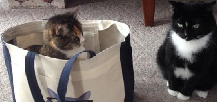 kedilerin-sevdigi-oyuncaklar-patiliyo-4
