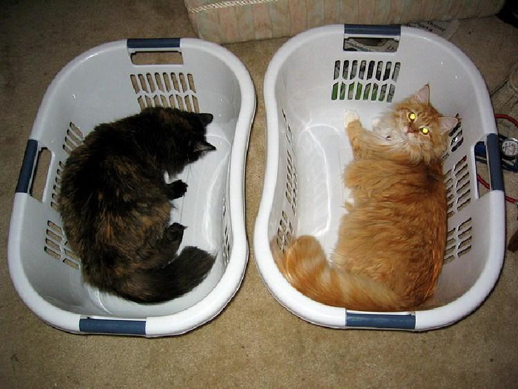 kedilerin-sevdigi-oyuncaklar-patiliyo-5