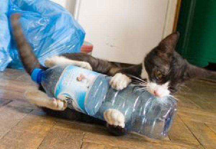 kedilerin-sevdigi-oyuncaklar-patiliyo-6