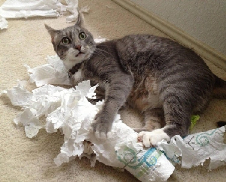 kedilerin-sevdigi-oyuncaklar-patiliyo-8