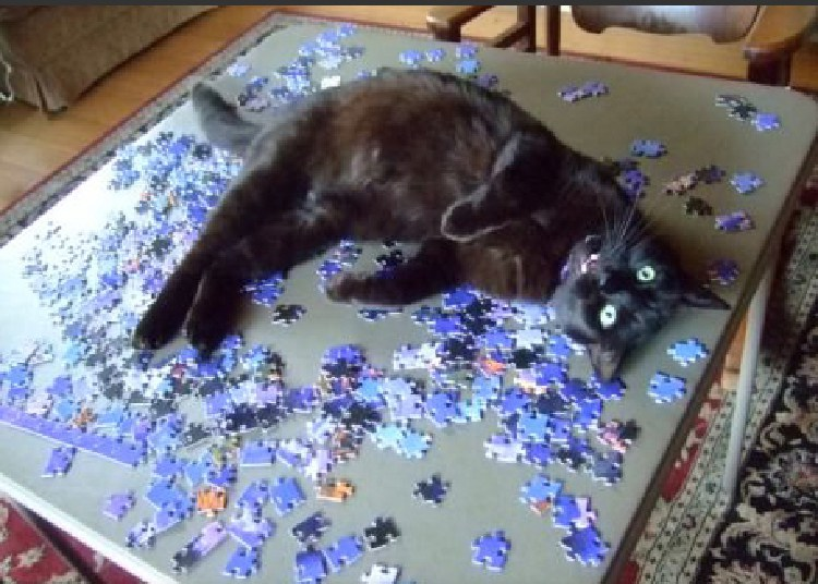 kedilerin-sevdigi-oyuncaklar-patiliyo-9